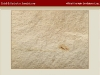 white-mountain_gold-sandstone